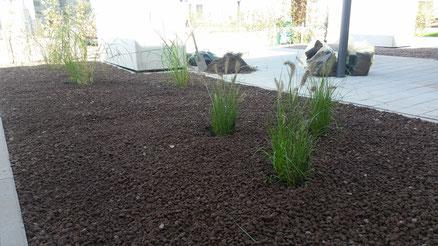 Lavadur als Rindenmulchersatz in einem neu angelegtem Beet: hier Gräser; Gartengestaltung Hannover
