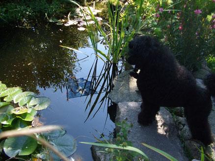 RieKe beobachtet unsere Fische :-)