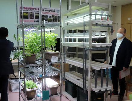 「しんよこはま地域活動ホーム」での有機水耕栽培の様子(2020年11月)