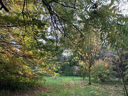 Dans l'arboretum, le 13 septembre 2020