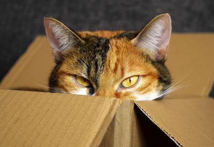 Katze mit Kartons alleine lassen