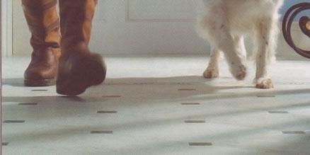 Füße und Pfoten gehen über Bodenbelag.
