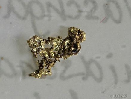 Größtes von uns gefundenes Golpartikel (ca 5mm)