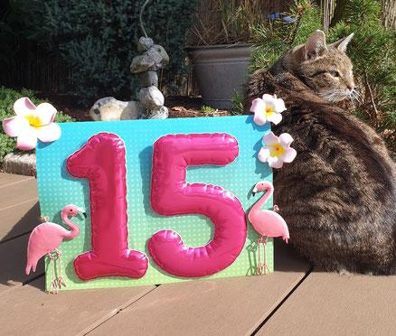 Katze Hermine feiert ihren Geburtstag