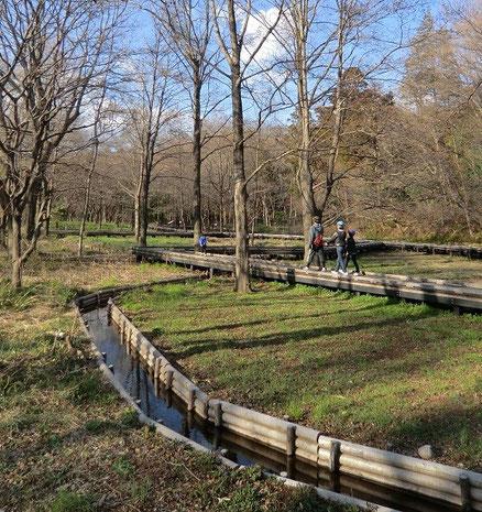 ●さっそく自然観察園に行ってみました。自然観察園は、ここが東京?と感じるような自然あふれる空間です