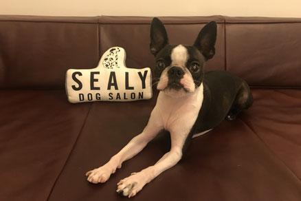 DOG SALON SEALY ドッグサロンシーリー 表参道 南青山 外苑前 神宮前 トリミングサロン 射手今日子 イデキョウコ トイプードル