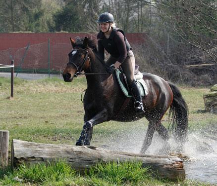 Vielseitiges Training für Sportpferde: Ab durch's Wasser!