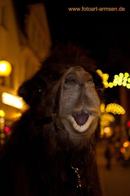 immer noch ein Kamel