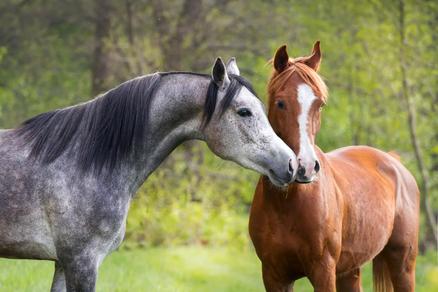 Pferd Araber Begrüßung Guten Tag Herzlich Willkommen