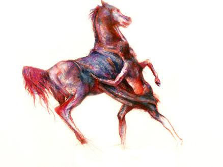 Pferd, horse, Zeichnung