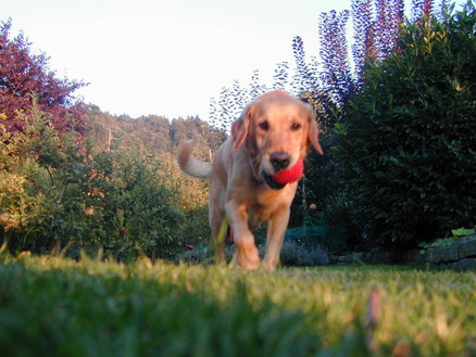 Hundetrainerin, zertifizierte Hundeschule, zertifizierter Assistenzhunde