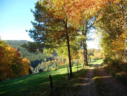 Blick zurück nach Dittersdorf