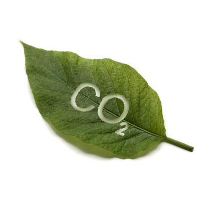 СО2  бальзам мазь Круг Жизни боль трава сбор суставная миома фиброма почки печень сердце позвоночник