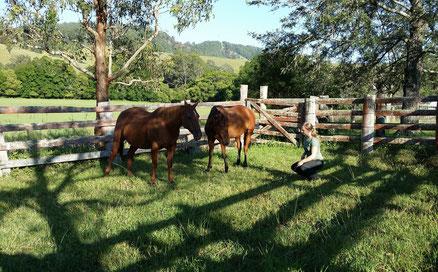 Natural Horsemanship mit Wildpferden