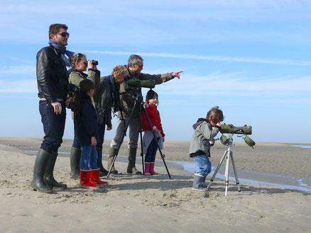 Baie de Somme - sortie nature - randonnée - guide nature - phoques - oiseaux