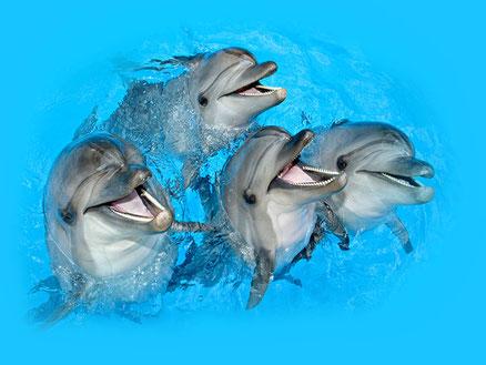 Delphinarium «Koktebel» *(klicken sie auf das foto, was würde die karte in voller größe)