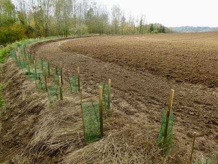 Plantation de haie en amont d'Aizelles