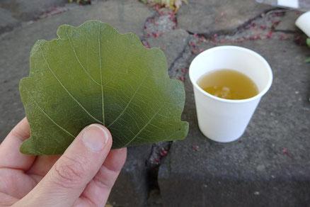 オークの葉で包む、柏餅が今回のお茶菓子