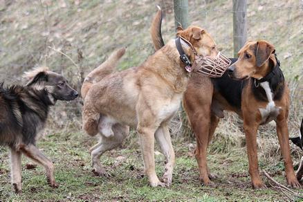 Drei Hunde davon einer mit Maulkorb stehen nebeneinander