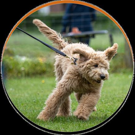 Kurs Hundeschule Leinenführigkeit