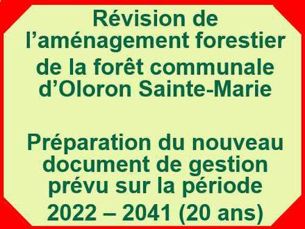 Comment seront gérées les forêts d'Oloron et la Forêt du Bager pour les 20 ans à venir ? L'ACCOB s'y emploie.