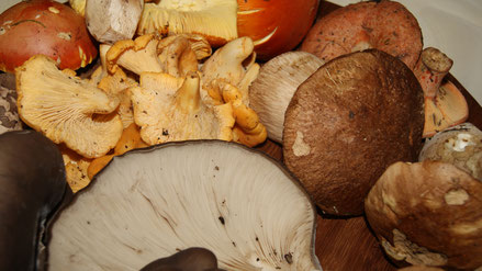 Pilzlehrfilm,100 Pilze im Spätherbst und Winter,Mobile Pilzschule,Dieter Honstrass,Algarve,Portugal