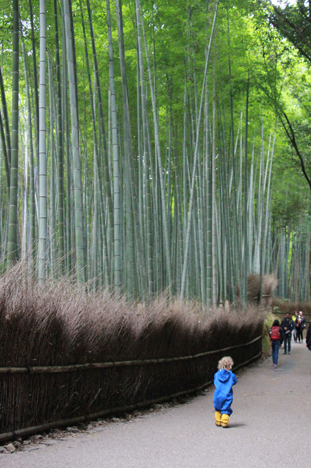 Family Friendly Walks in Kyoto, Japan - Arashiyama Bamboo Grove
