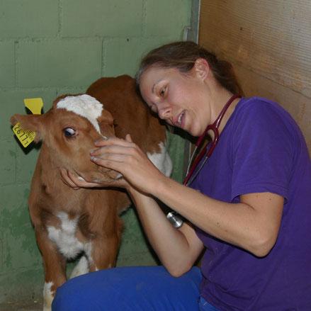 Hilfe bei Krankheit und Problemen - Kuh, Schwein, Pferd