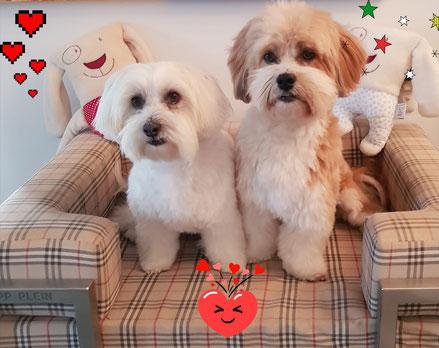Malteser Havaneser Hundenäpfe