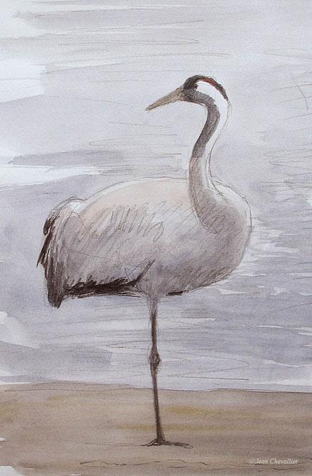 Grue cendrée, Grus grus, Lac du Der, aquarelle Jean Chevallier