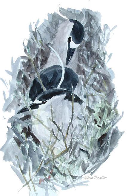 Couple de Bihoreaux Nycticorax nycticorax, aquarelle Jean Chevallier