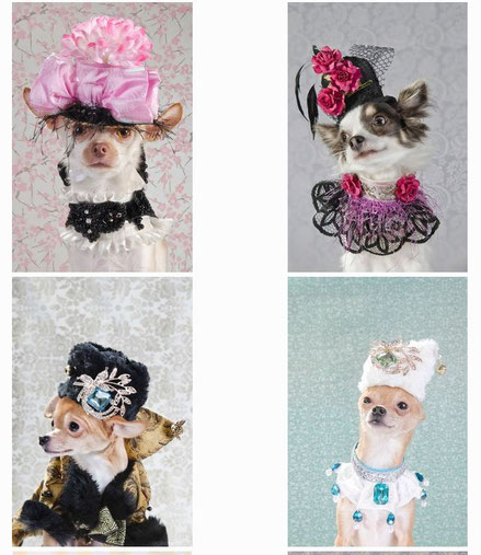 Chi-Love.de | Sophie Gamand | Dogvouge Serie
