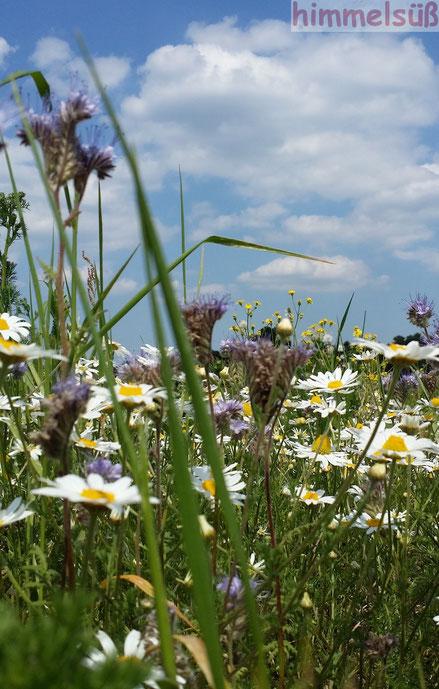 Natur pur - unsere Wildblütenvielfalt
