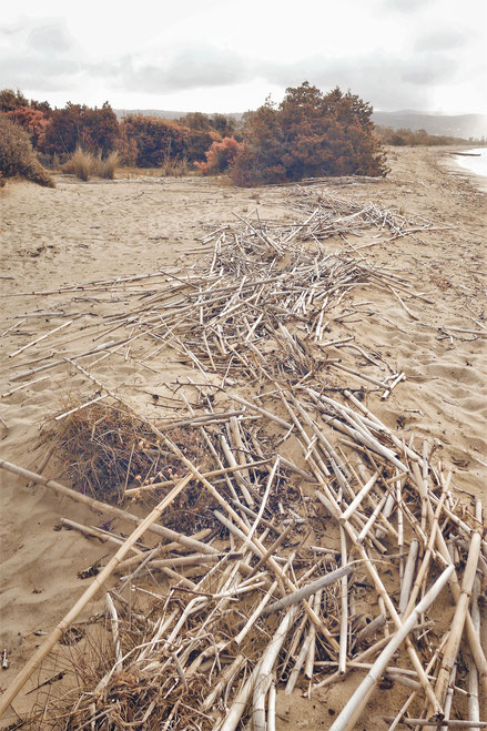 bigousteppes bambou pylos plage grèce péloponnèse