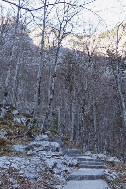 bigousteppes cascade marche foret slovénie