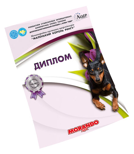 elegant diplomas design template; creative stylish diplomas design ideas; dog show diplomas design; FCI national monobreed zwergpinchers dog show Kiev Ukraine; UKU national dog show Ukraine; Ukrainian Kennel Union dog shows diplomas design; red grey gray