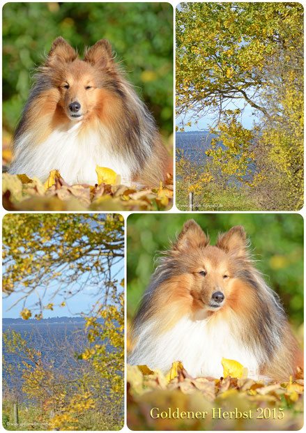 Mein fotocommunity Portfolio  Klickt auf das Foto