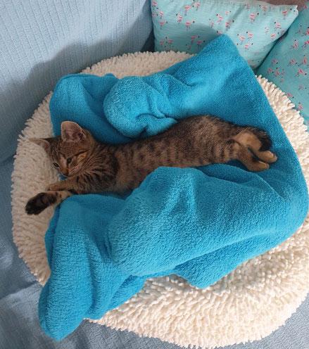 Schläft sich langsam groß: Katzenmädchen Fibi