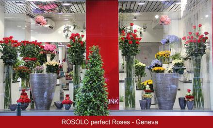 "Roses rouges ""Freedom"" 100-120-150-180 cm !"