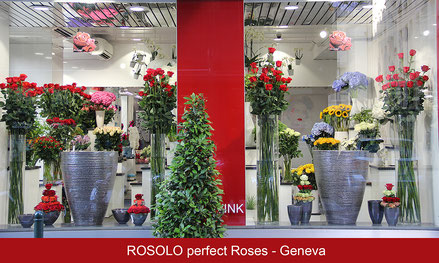 "Roses rouges ""Freedom"" 100-120-150-180 cm !"