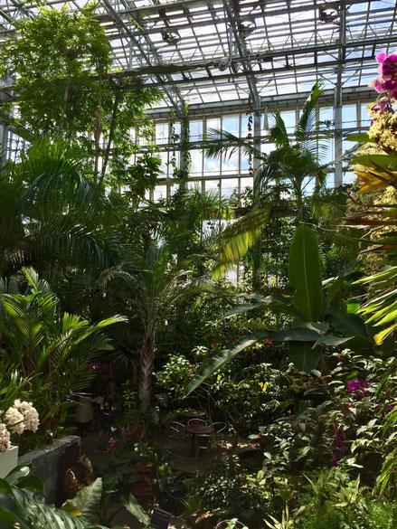 で植物園、、、ほんとゴイスーだわ♪