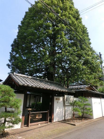 7月18日(2016) 楠と美術館: 小平市の玉川上水近くにある平櫛田中(ひらくしでんちゅう)彫刻美術館