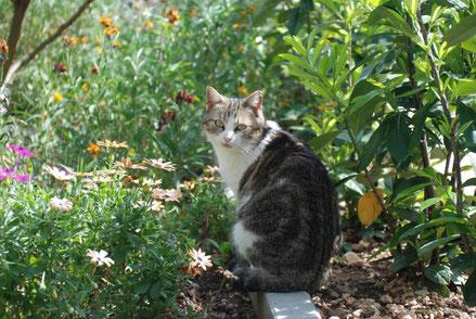 MAG Lifestyle Magazin Katzenfoto Katzenfotos Bilder Fotos Katze Katzen