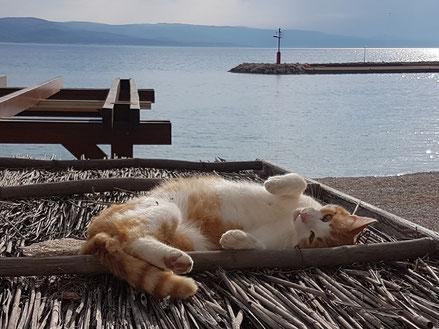 MAG Lifestyle Magazin Dalmatien Urlaub Reisen Adria Haustiere Katze Katzenfoto haustierfreundlicher Strand