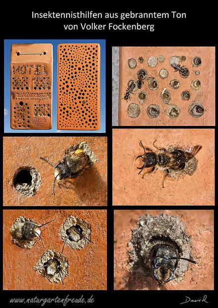 Nisthilfe insect nisting aid Insektenhotel insect hotel Rostrote Rote Mauerbiene Osmia bicornis red mason bee Scherenbiene scissor bee gebrannter Ton terrra cotta Volker Fockenberg