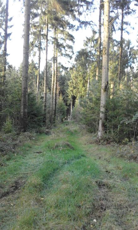 waldführung hahnenkoppel und  NSG talwald hahnenkoppel