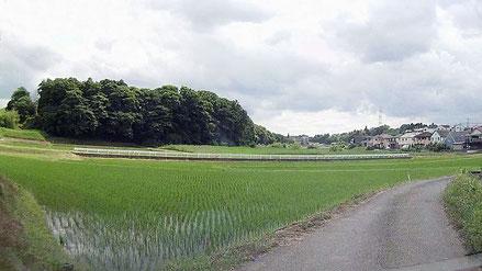 千葉県の のどかな田園地帯 所々に小さな里山が残されている