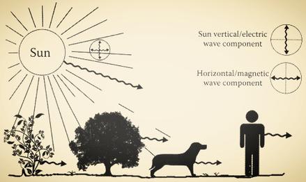 Schéma du mécanisme de polarisation des ondes - Source : Ibrahim Karim