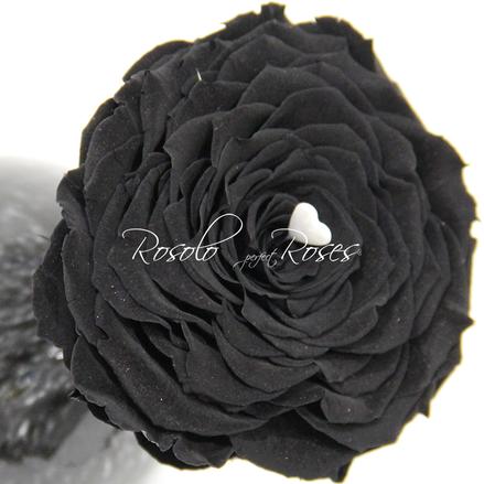 Rose noir Fleurop