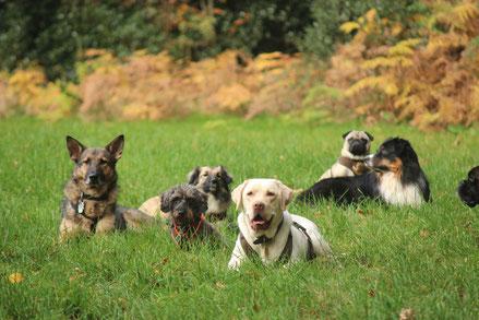 Gassi-Hunde warten auf der Wiese